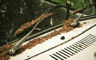 Clean out the air filter in your car this season
